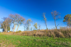 Autumnal field landscape with fallen leaves Stock Photography