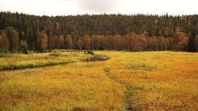 Autumnal finnish nature. Meadow and forest in Finland in autumnal colors Stock Photography