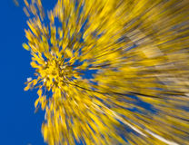 Autumnal fireworks Stock Photo