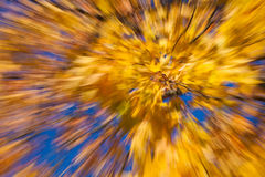 Autumnal fireworks Stock Photos