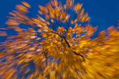 Autumnal fireworks Stock Images