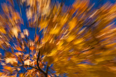 Autumnal fireworks Stock Image