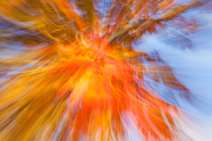 Autumnal fireworks Royalty Free Stock Image