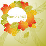 Autumnal floral background Stock Photos