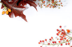 Autumnal floral frame Royalty Free Stock Photo