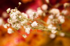Autumnal flower Stock Photography