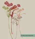 Autumnal flower Stock Image