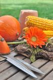 Autumnal flower and vegetable Stock Images