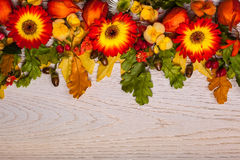 Autumnal flowers and berries Royalty Free Stock Photography