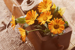 Autumnal flowers in box on wooden table. Postcard. Stock Photo