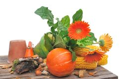 Autumnal flowers and vegetables Stock Photography