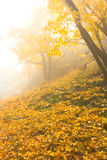 The Autumnal Fog Stock Images