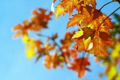 Autumnal Foliage Stock Photo