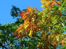 Autumnal Foliage Royalty Free Stock Photography
