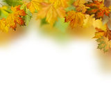Autumnal foliage Stock Photos