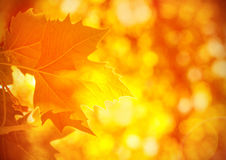 Autumnal foliage background Stock Photography