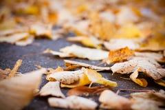 Autumnal foliage background Stock Image