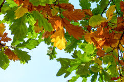 Autumnal Foliage Stock Photo