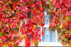Autumnal foliage Royalty Free Stock Images