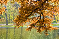 Autumnal foliage over lake. Closeup of Autumnal foliage on tree overhanging lake in countryside Stock Photography