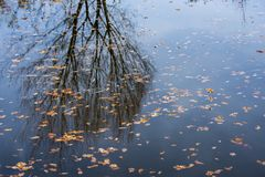 Autumnal foliage on a water level. Close up stock photography