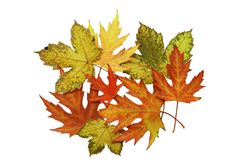 Autumnal Foliage on white back Royalty Free Stock Photography