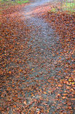 Autumnal footpath. Stock Images