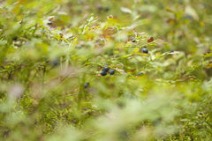 autumnal foraging background Stock Photo