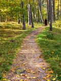Autumnal forerst in dune area of the Baltic Sea stock image