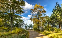 Autumnal forerst in dune area of the Baltic Sea royalty free stock photography