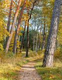 Autumnal forerst in dune area of Jurmala stock photography