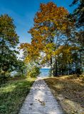 Autumnal forerst in dune area of Jurmala royalty free stock photo