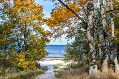 Autumnal forerst in dune area of Jurmala stock image