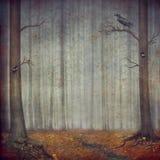 autumnal forest Το όμορφο υπόβαθρο φύσης Στοκ Εικόνες