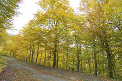 Autumnal forest Royalty Free Stock Images