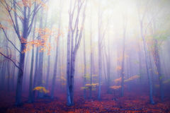 Autumnal forest Stock Photography