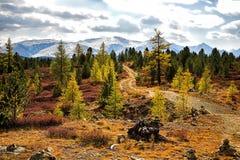 autumnal forest στοκ φωτογραφίες