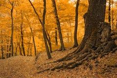 autumnal forest Στοκ Φωτογραφία