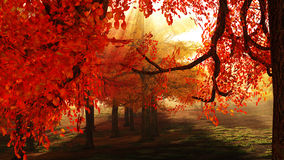 autumnal forest Στοκ εικόνα με δικαίωμα ελεύθερης χρήσης