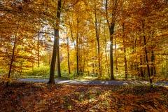 autumnal forest Στοκ φωτογραφίες με δικαίωμα ελεύθερης χρήσης