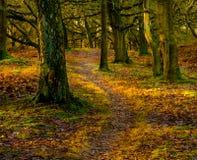 autumnal forest Στοκ εικόνες με δικαίωμα ελεύθερης χρήσης