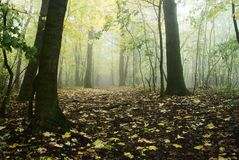 Autumnal forest Stock Image