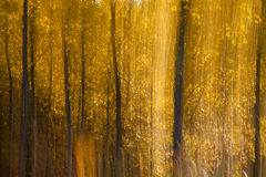 Autumnal forest abstraction Royalty Free Stock Photo