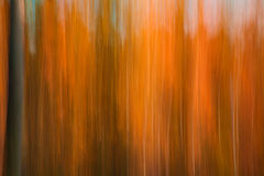 Autumnal forest abstraction. With camera motion stock photography