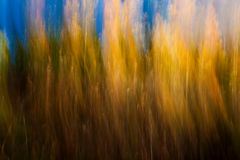 Autumnal forest abstraction. With camera motion royalty free stock photo