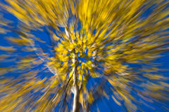 Autumnal forest abstraction Stock Photo