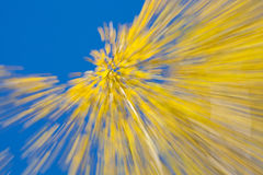 Autumnal forest abstraction Stock Image