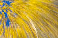 Autumnal forest abstraction Stock Photos