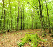 Autumnal forest. Stock Photography
