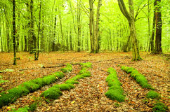 Autumnal forest. Stock Images